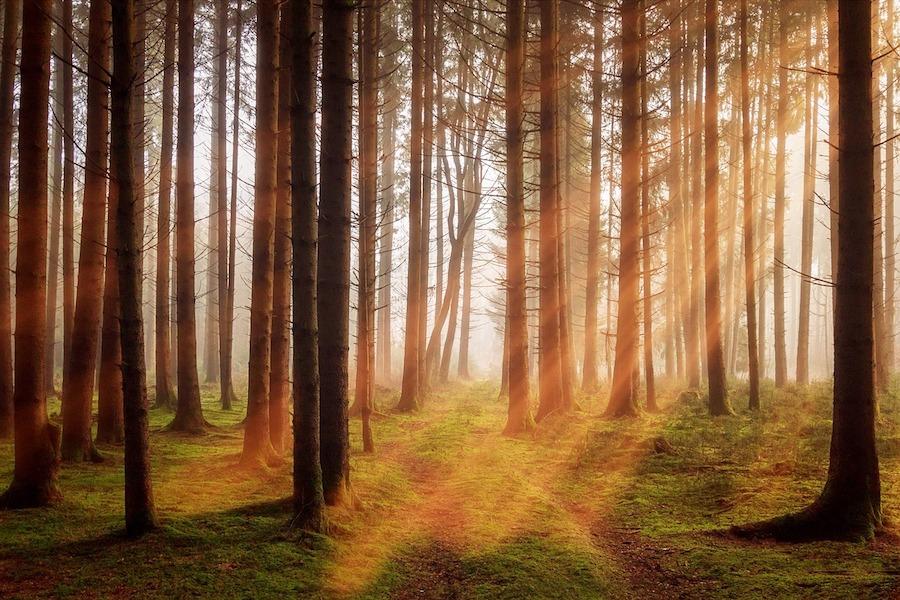 New Zealand to plant 1 billion trees
